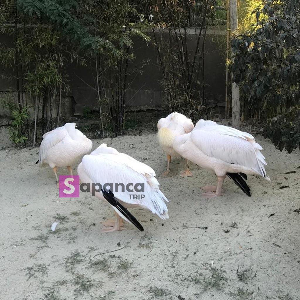 طيور في داريجا سبانجا