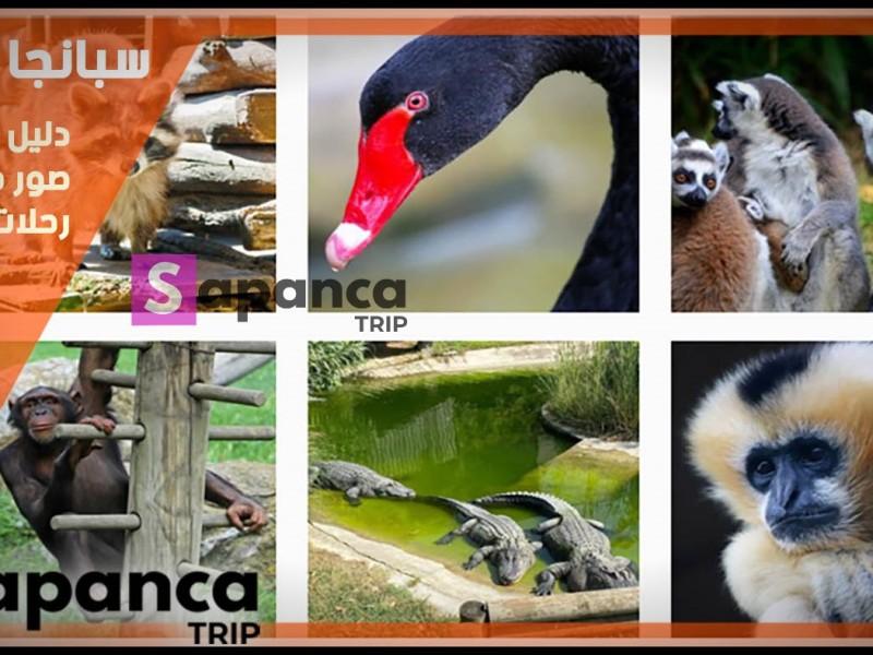 حديقة الحيوانات في اسطنبول اسيا