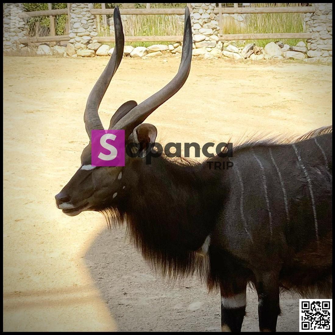 حديقة حيوان في سبانجا
